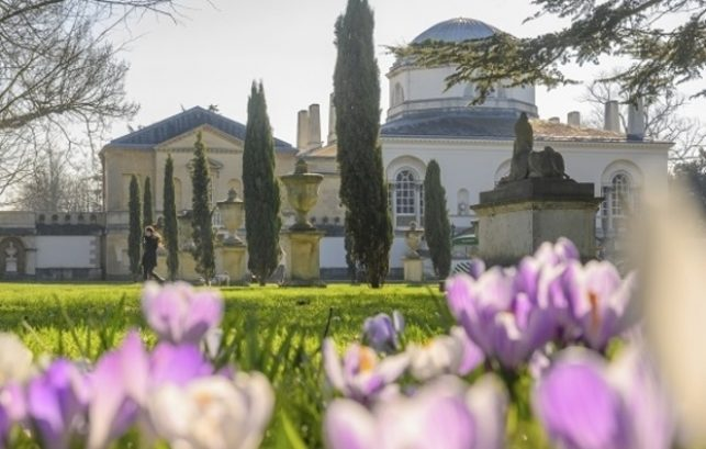 Image shows the Kitchen Gardens at Chiswick House. It is a large cream coloured building with a dome roof. There are some tall thin green trees planted near to the house. In the foreground of the image are pink and purple crocus flowers.